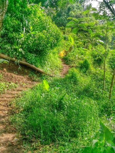 Stairway To Village Nature Landscape EyeEm Nature Lover Trees Forest Stairway Ladder Tracks
