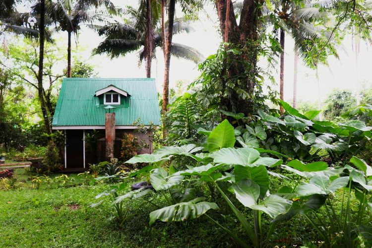 House amidst trees and plants