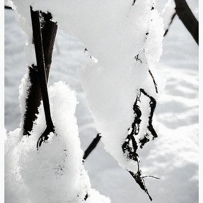 Puglia Snow InMyPlace Frozen myhome mysoul instabest instacool bestshot