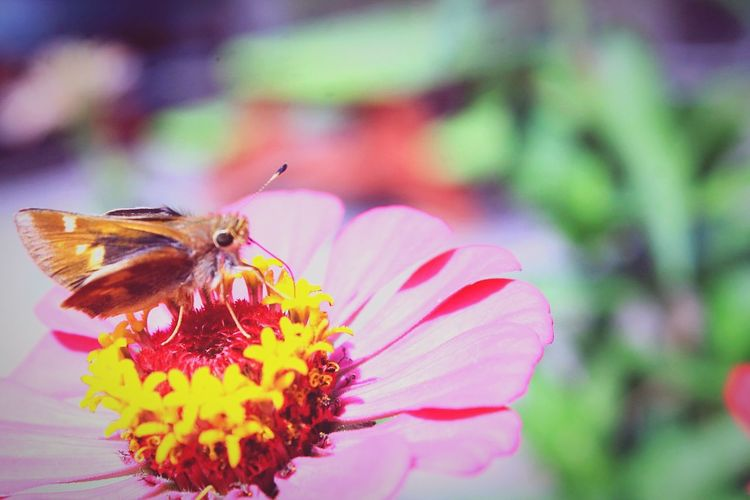 Pollenatiom Station. Deceptively Simple Pollenation Life Nature Photography Sharing Life Precious Moments Of Life Butterfly