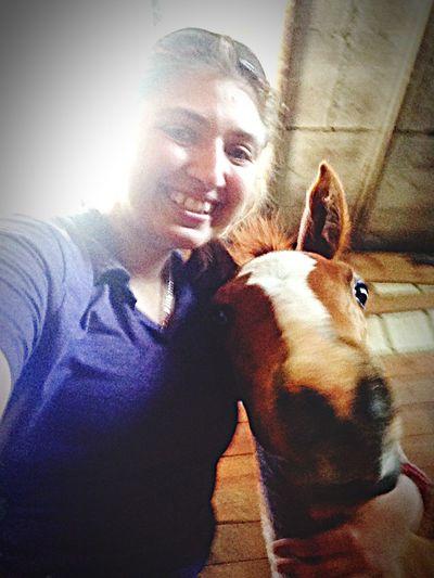 Oh Hi There  Equestrian Life UCET 2015 Foals Foals Bentley :) I Love My Horse Horse Life