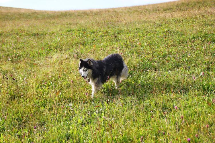 Pets Dog Border