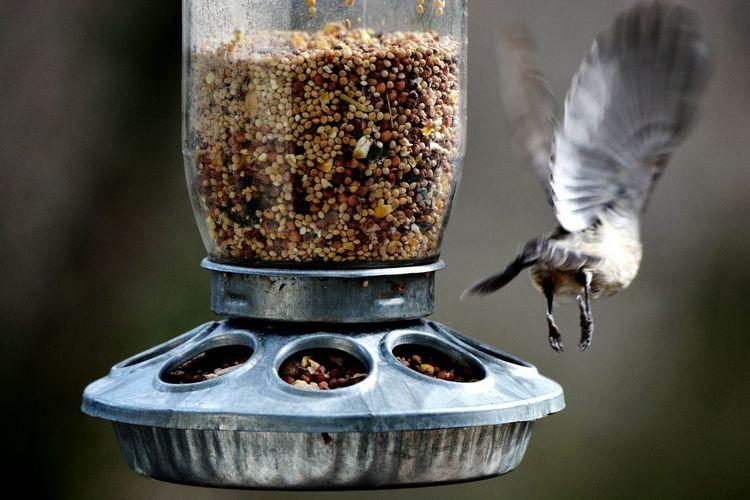 Bird flying off from feeder