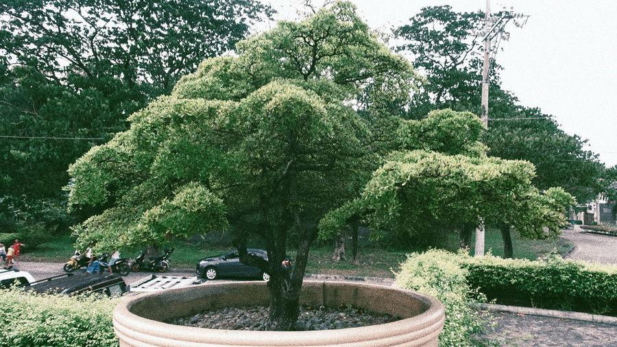Tree Fountain