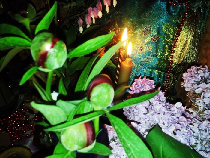 High angle view of lit candles on plant
