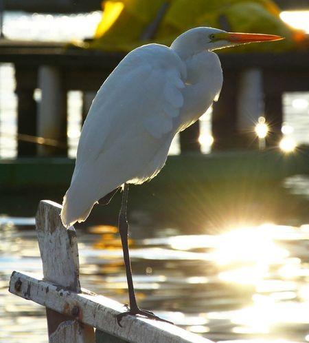 Bird Boats Creative Light And Shadow Egret Egretta Egretta Alba Elégance Nature No People One Legged Bird Reflections Sea View Water