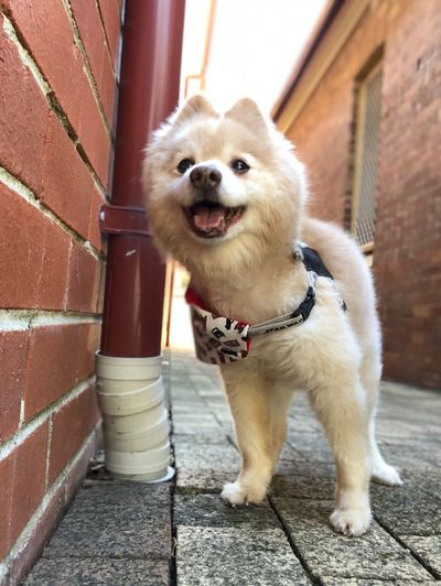 Kimba Dog 🐶 Doggo Dogs Of EyeEm Domestic Domestic Animals One Animal Pets Mammal Dog Animal Themes Canine Animal Looking At Camera Portrait