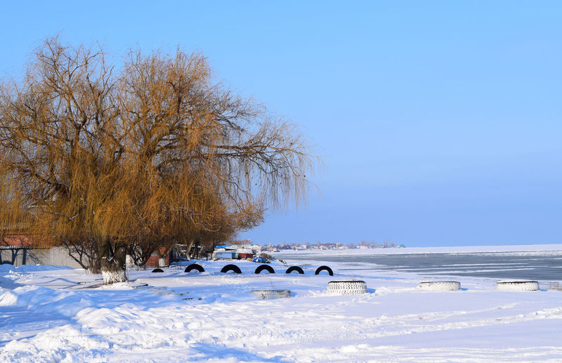 Seashore Wintertime Azovsea Beach Frosty Melting Ice Sea And Sky Seascape Seaside Season  Snow Snow Covered Willow Willow Tree
