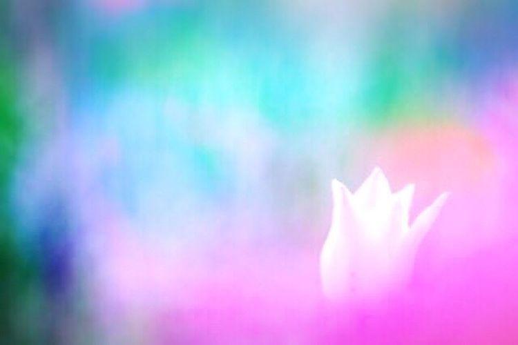 恋心 EyeEm EyeEmBestPics EyeEm Best Shots EyeTime EyeEm Flower Flower Dream