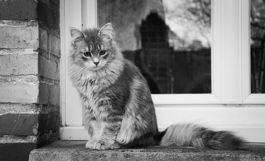 Black & White Blackandwhite Photography Shades Of Grey Catoftheday Cats Of EyeEm B&w Nature