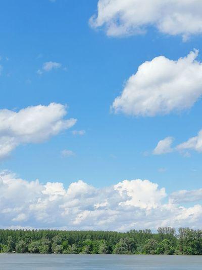The Purist (no Edit, No Filter) EyeEm Best Shots EyeEmNewHere Enjoying Life EyeEm Nature Lover EyeEm Gallery Water River Danube Tree Blue Forest Summer Sky Cloud - Sky