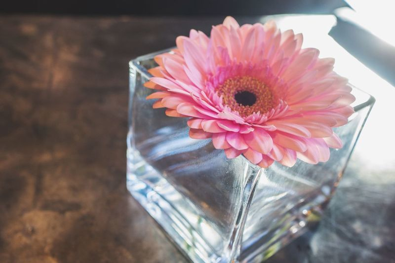 High angle view of pink dahlia in vase on table