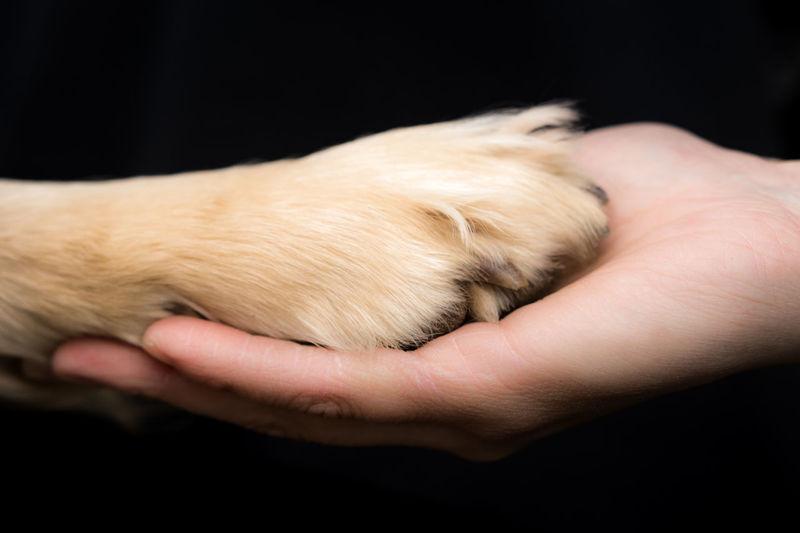 Dog Love Friends Hand Humans Best Friend Paw Paw + Paw With Hand Paw+hand Petlove  Thankful Paws