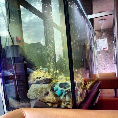 Хочу аквариум