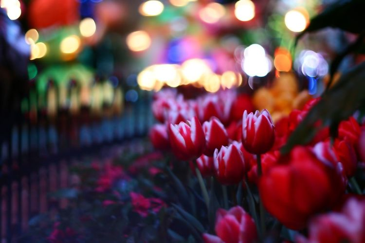 Thank You,❤️ Flower Petal Beauty In Nature Nature Freshness Fragility Selective Focus Night No People Close-up Red Flower Head Growth Blooming Outdoors Illuminated I Always Thinking About U, G I Want To Know Your Secret, C
