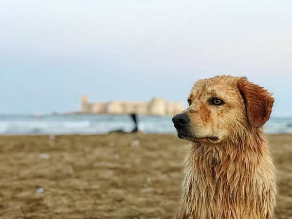 holiday sea and dog One Animal Water Animal Themes Animal Sky Beach Focus On Foreground Mammal Land Vertebrate Sea No People Day Nature Animal Head  Close-up Looking Dog Canine