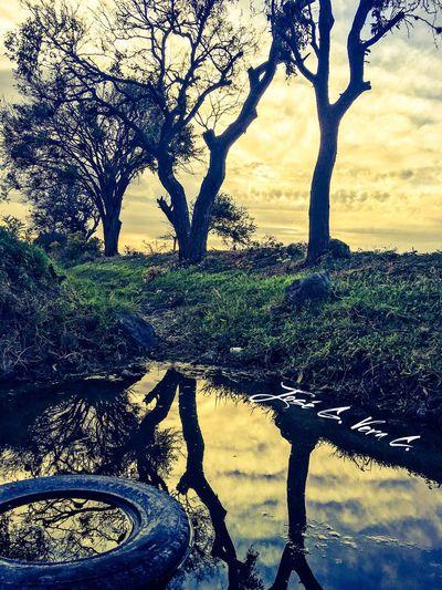 Guanajuato Arboles Reflection Reflejos En El Agua Atardecer JVAxis