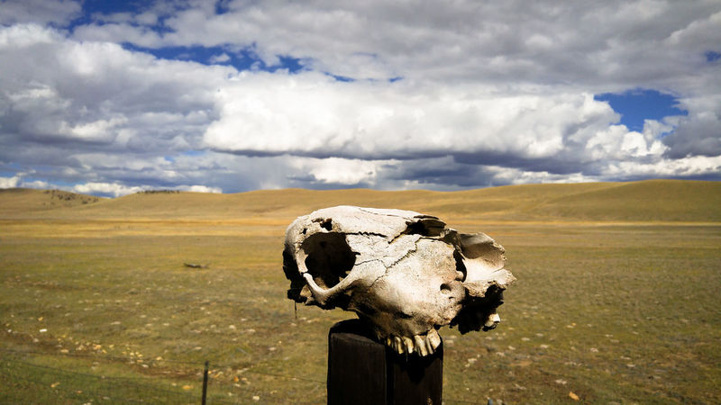 Home on the Range Barbed Wire Bones Colorado Death EyeEmNewHere Ranch Animal Skull Cattle Cloud - Sky Cow Fencepost Landscape Outdoors Silence Skull Solitude Valley