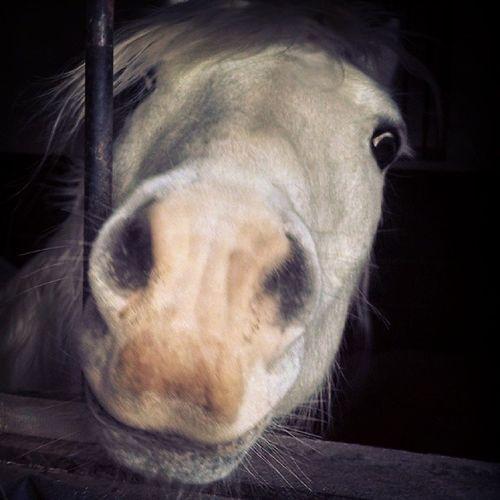 Feed me now woman! Hunter Pony Morning North Carolina Southern Pines Farm Life Pony Summer