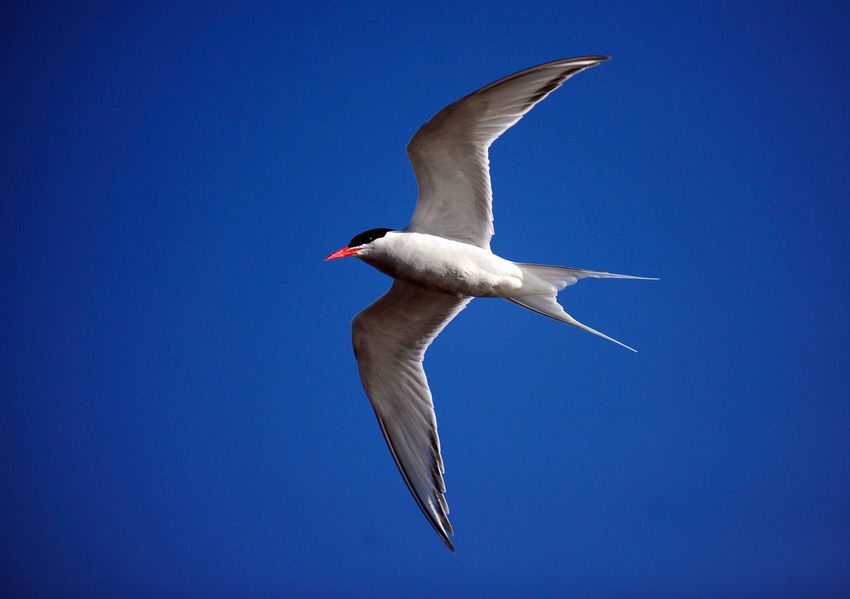 Seagull Animal Themes Animal Wildlife Animals In The Wild Argentina Bird Bird Seagull Blue Clear Sky Close Up Comodoro Rivadavia Chubut Day Flying Full Length Nature No People One Animal Outdoors Port Bird Seabird Seagull Spread Wings White Bird