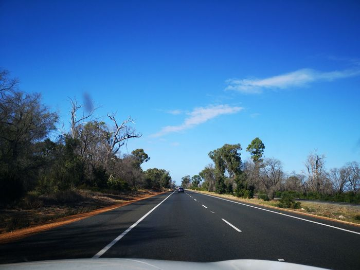 Tree Road Journey Asphalt Driving Sky Travel Car Point Of View Empty Road Highway Country Road