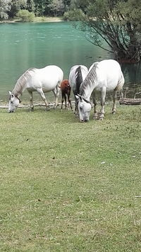 Horse Day Tranquility Animal Themes Domestic Animals Mammal Side View Horse Water Lake Livestock Grass Lakeshore Grazing Full Length Herbivorous Day Tranquility Nature Zoology Pasture Non-urban Scene No People