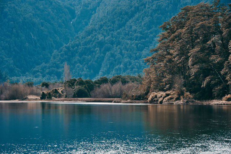 Black river... Beauty In Nature Day Forest Growth Idyllic Lake Mountain Mountain Range Nature No People Non-urban Scene Outdoors Patagonia Plant River Scenics Scenics - Nature Tourism Tranquil Scene Tranquility Travel Destinations Tree View Into Land Water Waterfront