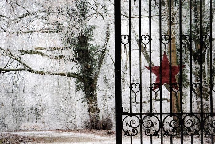 Christmas Decoration Fabulous Hoarfrost On The Tree Winter Trees Winter Wonderland Winter_collection Winterscapes Wintertime Wintertime ⛄