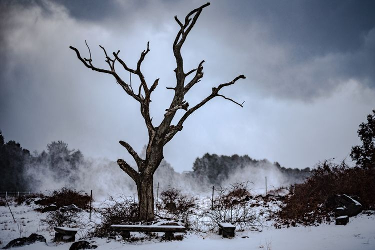 Bare Tree Winter Snow Bare Tree Landscape Tree Sky Cold Temperature Nature Weather Outdoors Day Tree Trunk No People Beauty In Nature Shades Of Winter EyeEmNewHere