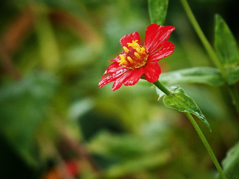 Flower Tiny Flower Flowers,Plants & Garden Flower Collection Nature_collection Beauty In Nature