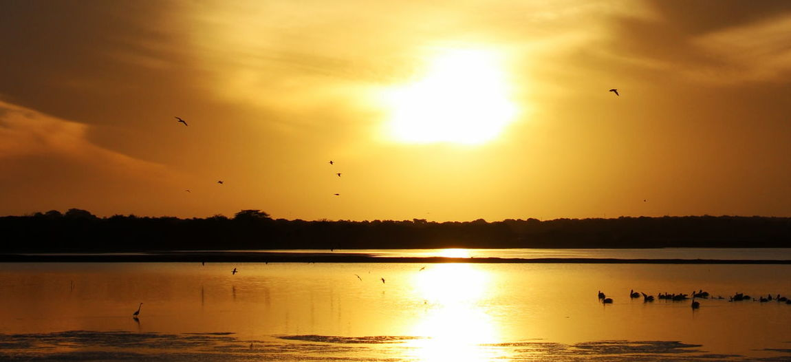 It is gold Sun Sunlight River River View Sunset Gold Colored Gold Nature Photography An Eye For Travel Bird Sunset Animals In The Wild Flying Animal Wildlife Flock Of Birds Animal Themes Large Group Of Animals Water Sun Water Bird Sky Lake Beauty In Nature Nature Duck Animal