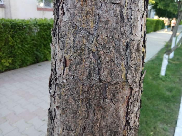 Tree trunk - close-up Tree Tree Trunk Close-up