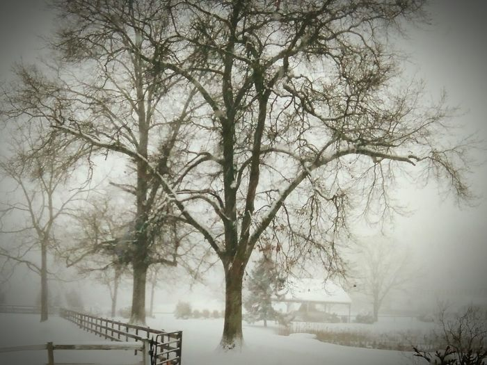 Tree Snowing Storm Outdoors Taking Photos EyeEm Nature Lover EyeEm Best Edits Blusterynight Cold Temperature Snow Day Snow Covered Landscape Bare Tree Winter