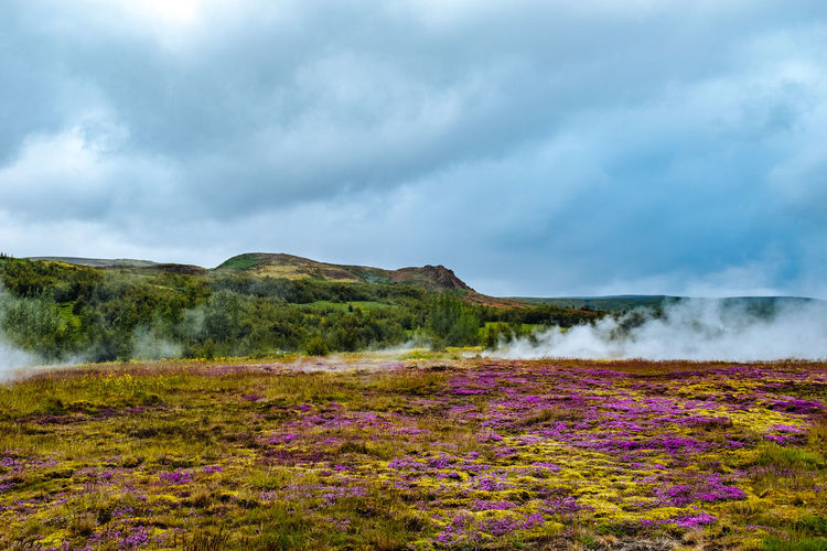 Iceland Beauty In Nature Cloud - Sky Day Flower Grass Hot Spring Lake Landscape Mountain Natural Phenomenon Nature No People Outdoors Power In Nature Scenics Sky Steam Tranquil Scene Tranquility Travel Destinations Water