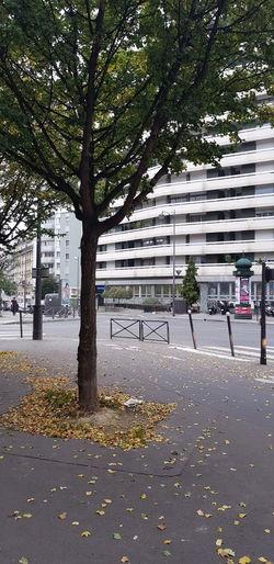 Trees by sidewalk in city