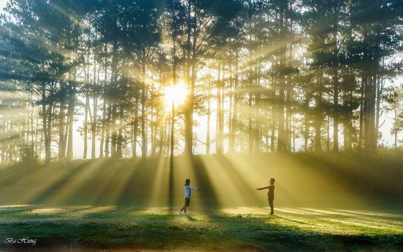 People in sunlight falling on trees