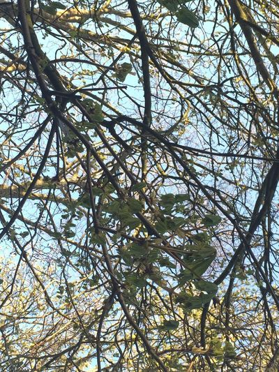Tree Branches Blue Sky Huddersfield