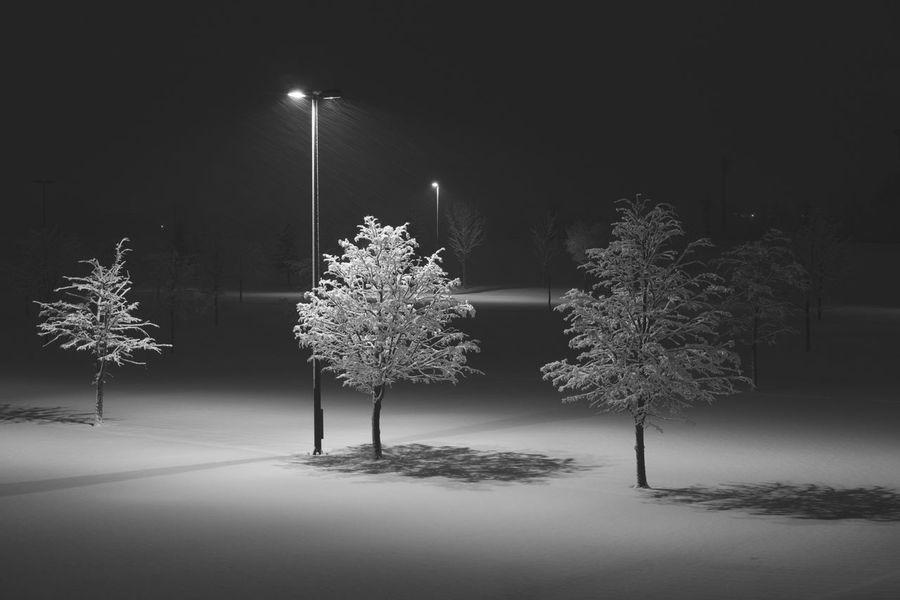 Monochrome Japan Tree Night Winter Illuminated Snow Cold Temperature Nature The Week On EyeEm Editor's Picks