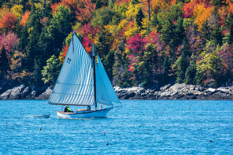 Sailboat Sailing On Sea By Trees