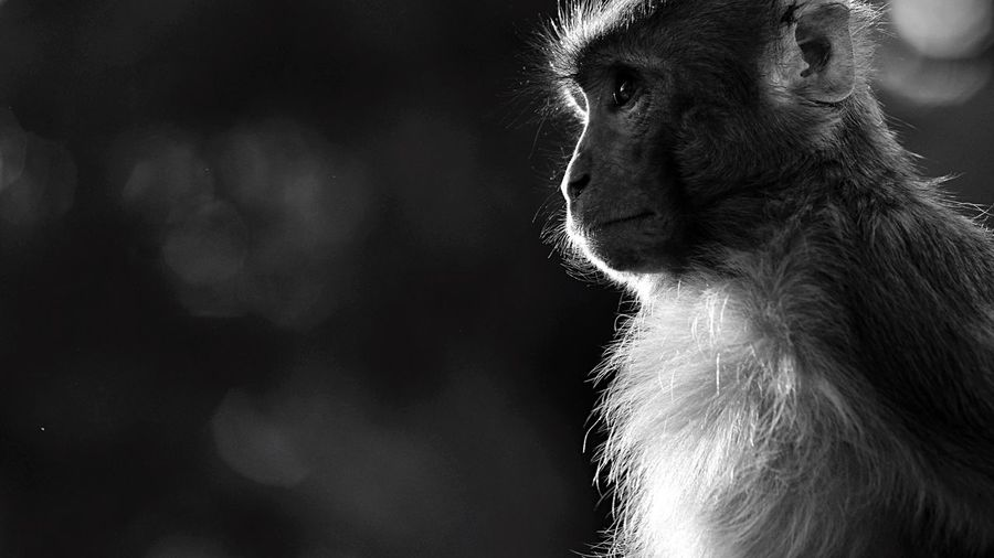 Street Photography Outdoors EyeEm Best Shots - The Streets Nepal HUMANITY Animals Black And White Monkey Life Portrait