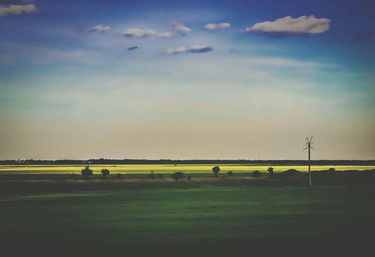 Romanian canola fields First Eyeem Photo