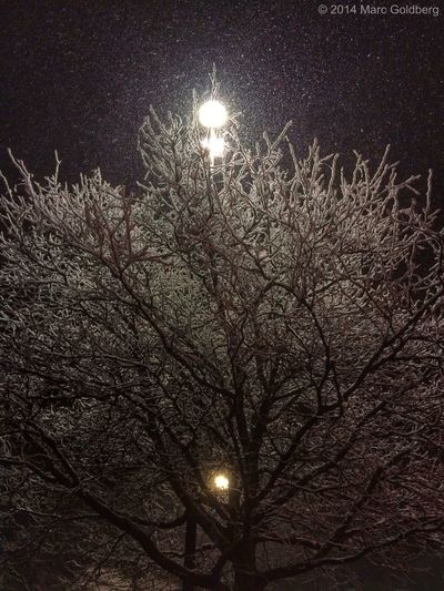 """Galaxian,"" Sangertown Square Mall, Town of New Hartford, New York, 11/13/14 Trees Winter Snow Light Night Textures And Surfaces Mobile Photography"