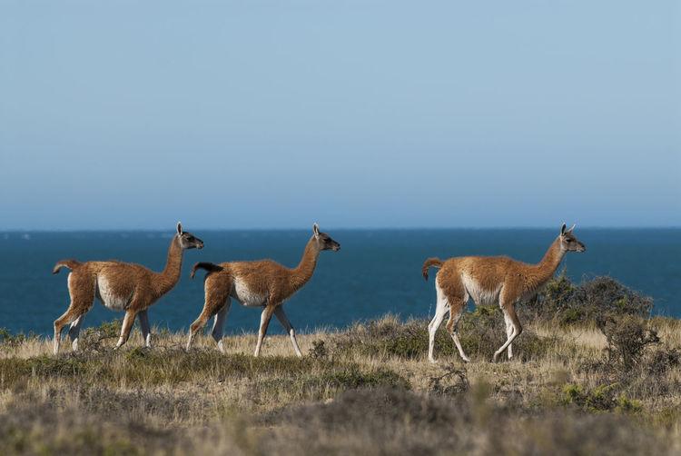 Herd of deer on field against sky