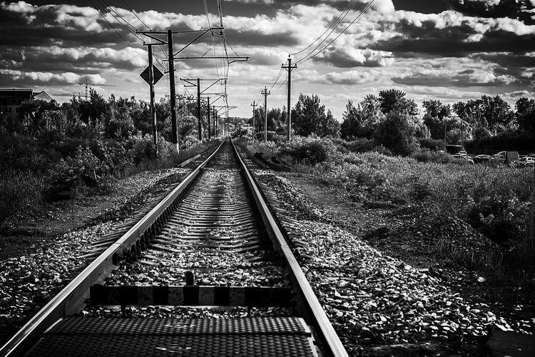Railroad track along trees
