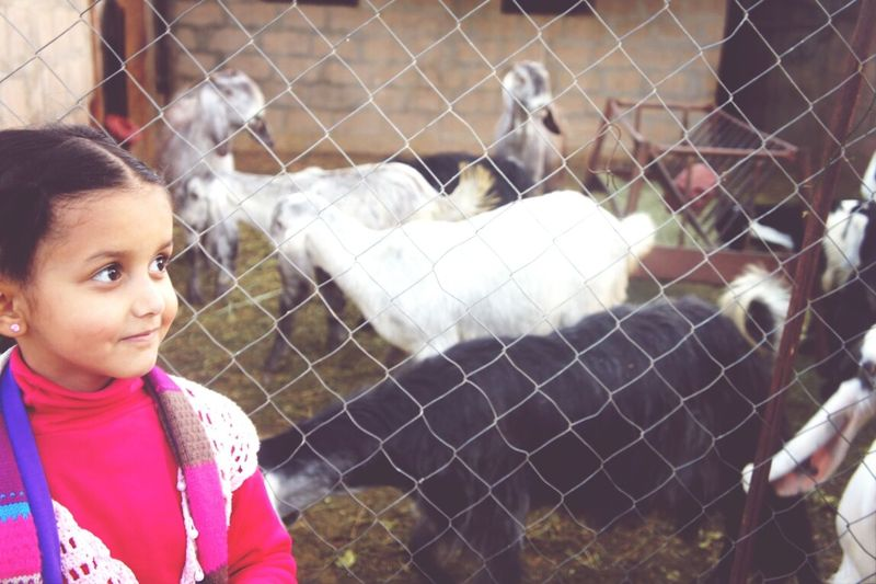 lujain loves goats more than me ? ): ? Farm Animals Taking Photos Kids