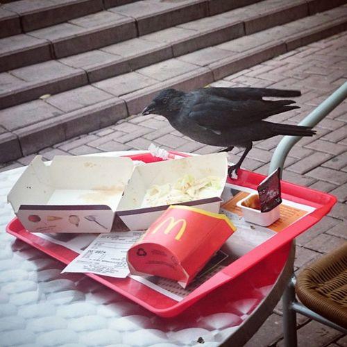 Mcdonalds Bird Beautiful