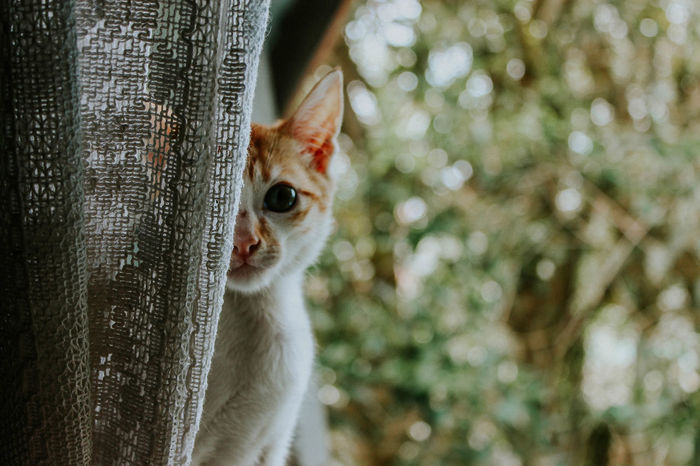 Amatuerphotography Animal Themes Bokeh Bokeh Photography Botany Close-up Domestic Cat Feline Lightroom Lxc Nature Outdoors Pets Tribe Archipelago