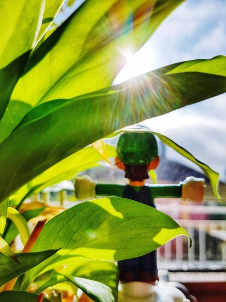 Good Morning Rise And Shine Kitchen Garden Sunshine Window View Toy Figure Green Color Green Leaves