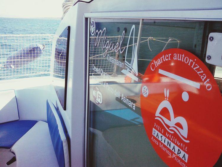 Escursioneasinara Escursionecatamarano Noleggiocatamaranosardegna Asinara #asinaracatamaran