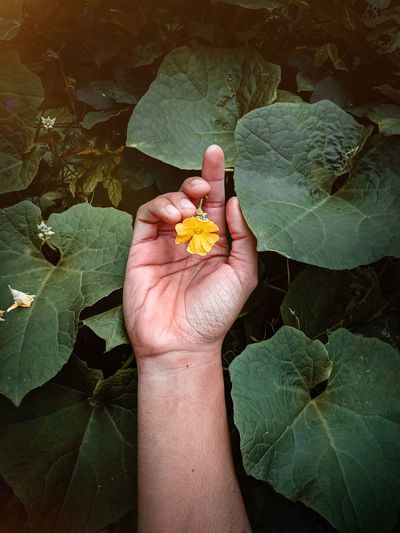 High angle view of hand holding leaves